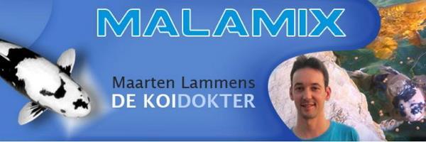 Koidokter Maarten Lammens